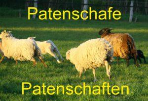 Schafiges Woll-Patenschaf